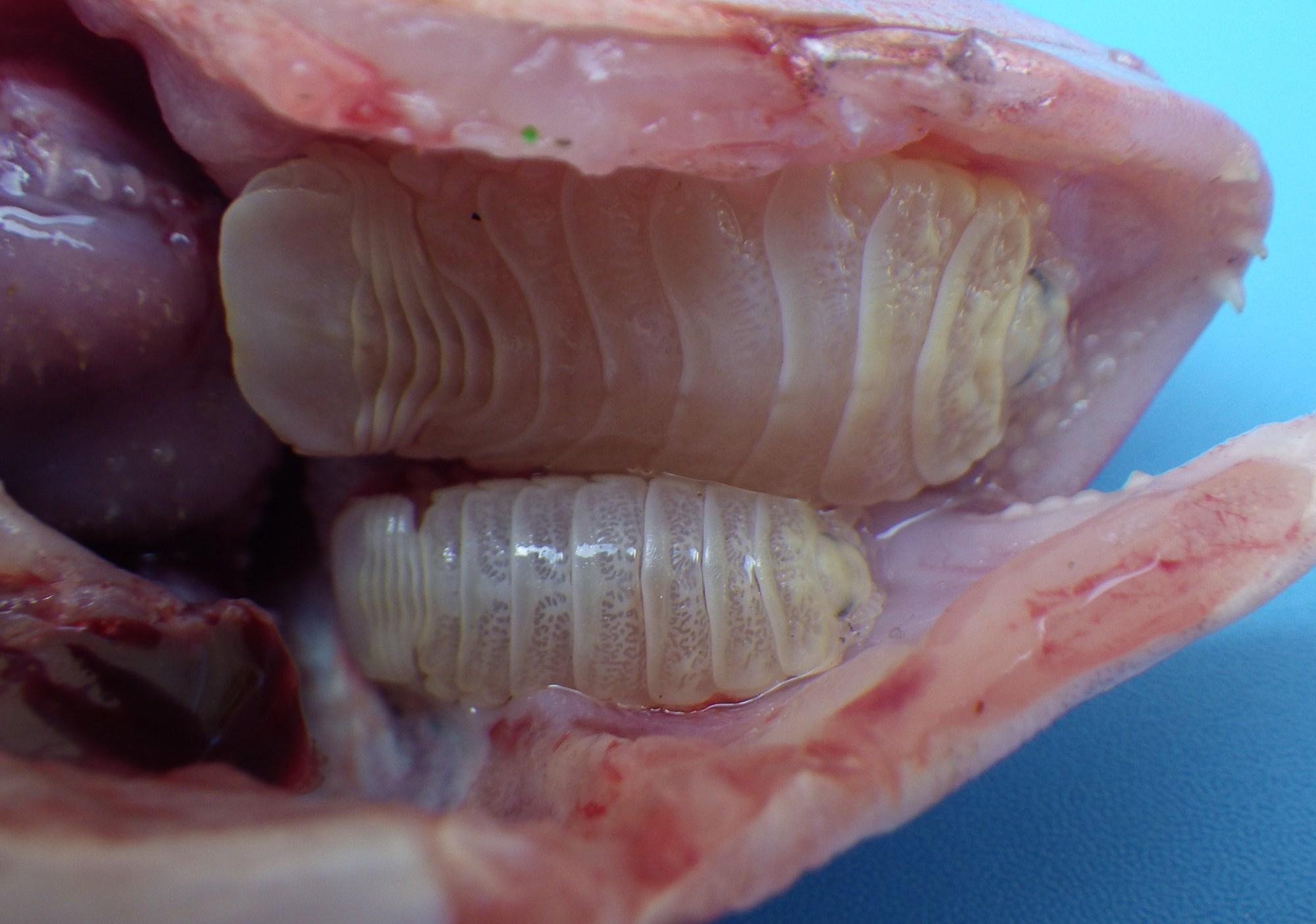 魚 寄生 虫
